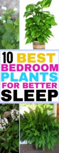 These best plants for bedrooms that can help you sleep better are absolutely amazing!