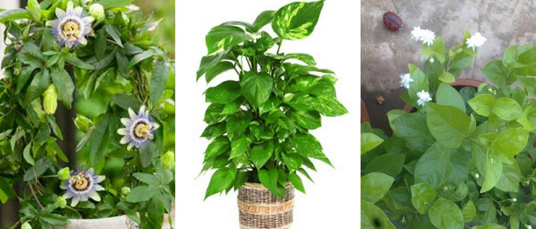 bedroom plants 8 best bedroom plants to improve sleep